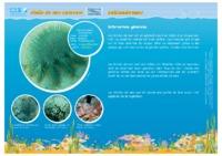 NC06_Fiches_Algues-Coraux-Echinodermes.pdf