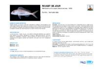 nemipterus_furcosus.pdf