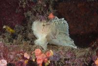 poisson-feuille-2-pierre-marin-razi-ffessm.jpg