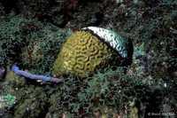 Blanchissement corail - Antilles 1_franck mazeas.JPG