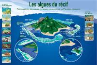 PF10_poster-algues.pdf